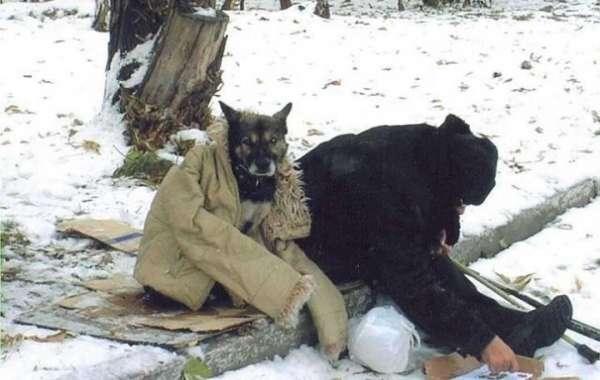 В мире  животных!?