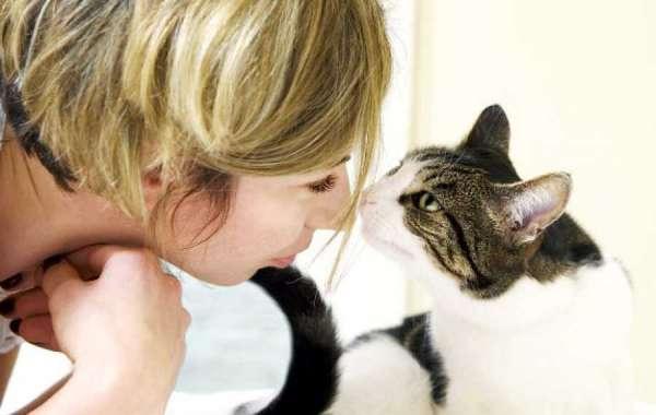 Моё общение с кошками