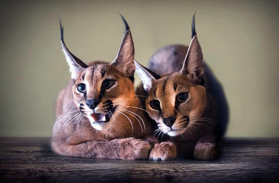 Самые красивые животные планеты (+ 24 ФОТО)