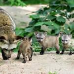 foxes Profile Picture