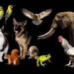 animalsik Profile Picture