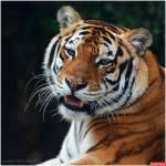 В Мире Животных Profile Picture
