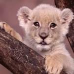 Красивые животные Profile Picture