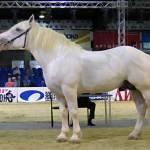 Першеронская лошадь Profile Picture