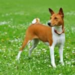 Интересные факты о собаках Profile Picture