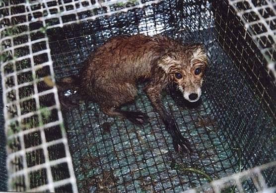 Нет притравке: пресс-конференция 15 мая, 12.00, Интерфакс (Москва)  | Центр защиты прав животных «ВИТА»