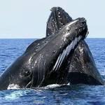 Защита Китов Profile Picture