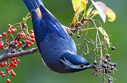 Пищеварительная система птиц кратко фото