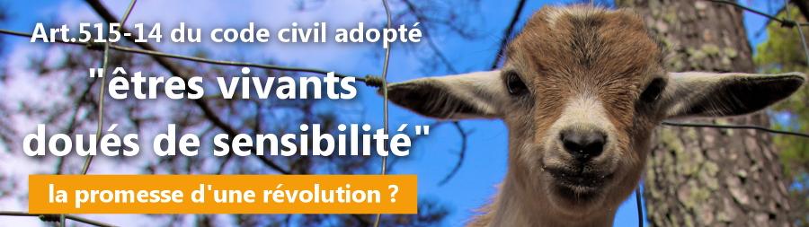 Nouveau statut des animaux : la promesse d'une révolution | Éthique et animaux