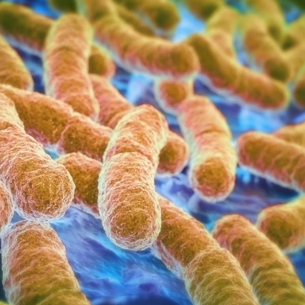 Probiotici, passa dall'intestino la nuova frontiera del benessere? - De Gustibus
