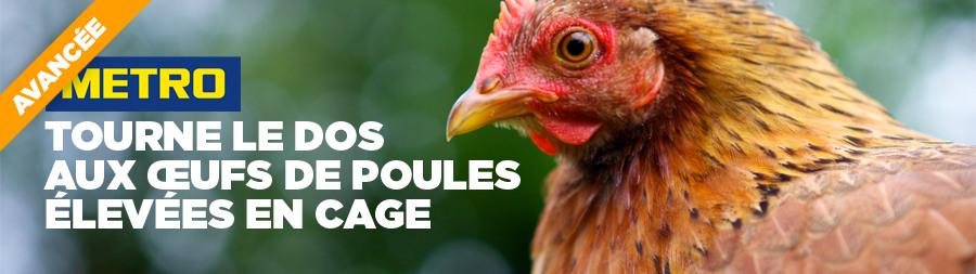 METRO France tourne le dos aux œufs de poules élevées en cage | Éthique et animaux