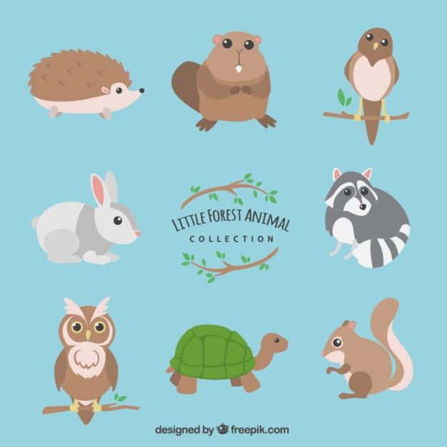 Collection d'animaux Little forêt  | Télécharger des Vecteurs gratuitement