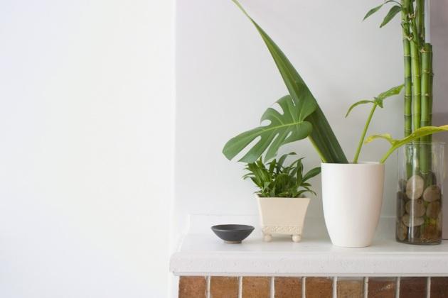 Come riossigenare l'aria delle nostre case attraverso comuni piante d'appartamento. - Focus.it