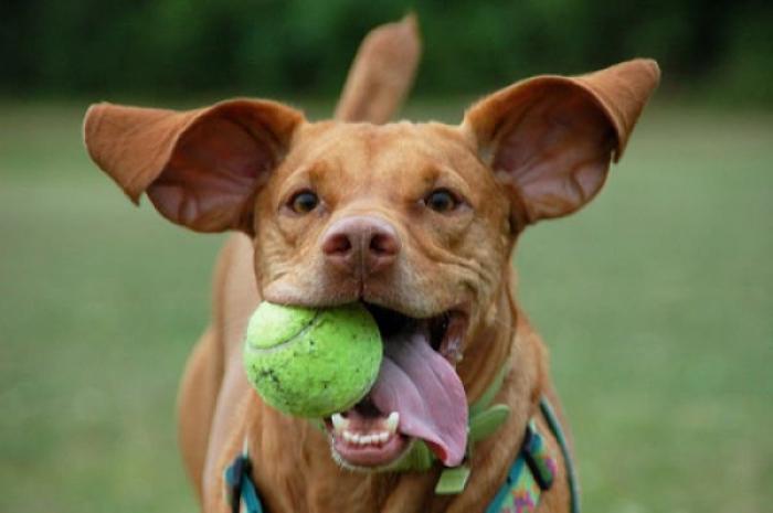 11 précieux enseignements que nos chiens nous apprennent sur la vie !