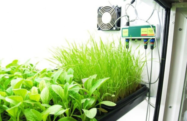 Produci le tue verdure con l'orto idroponico - Focus.it
