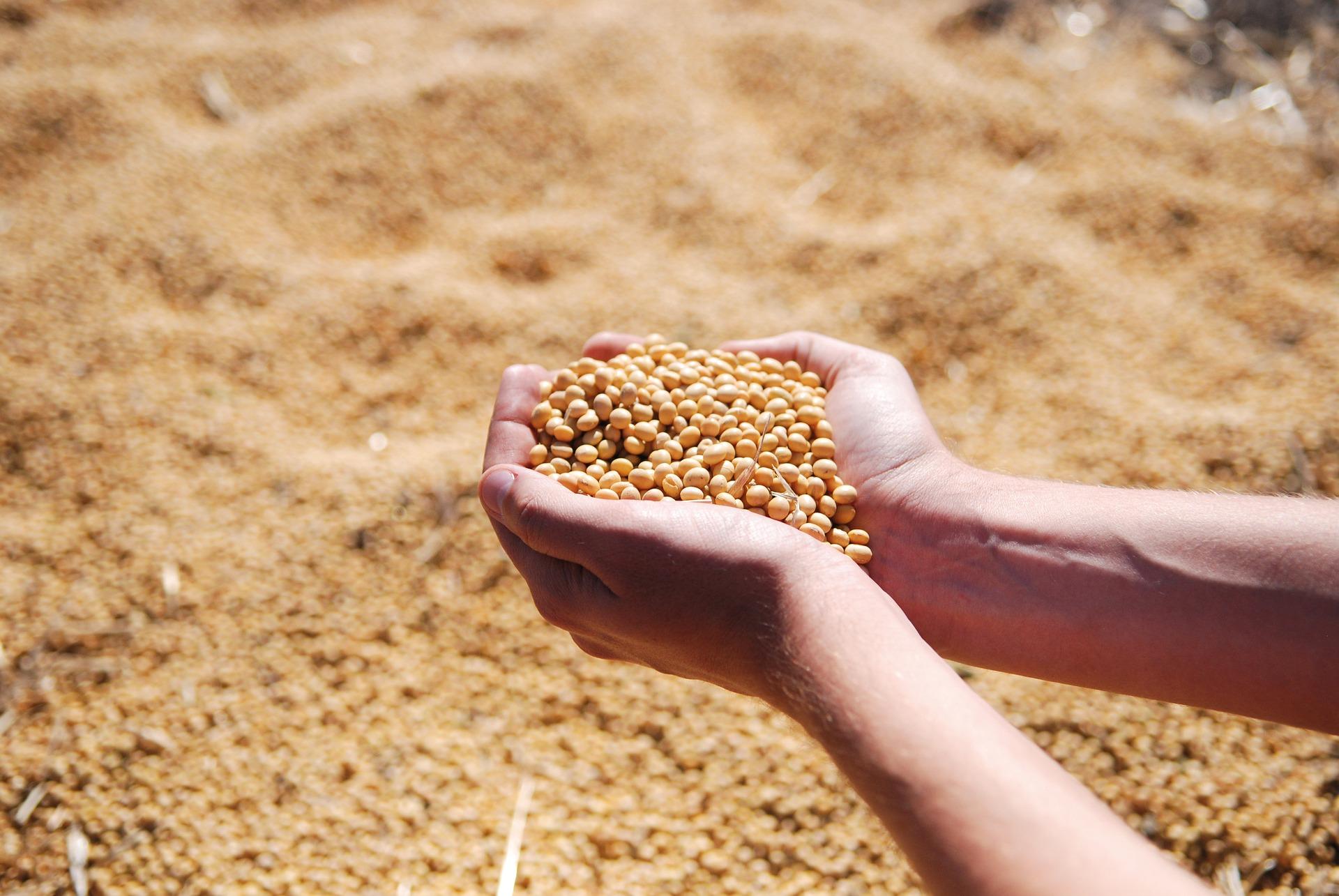 Nouveaux OGM : une pétition de plus de 110 000 signatures remise à Nicolas Hulot   France Nature Environnement