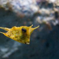 Poissons méditerranéens tropicaux marins | Seaquarium