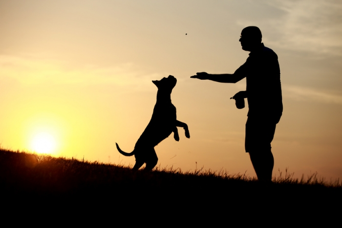 Faire face au décès de son chien : comment surmonter sa mort ?