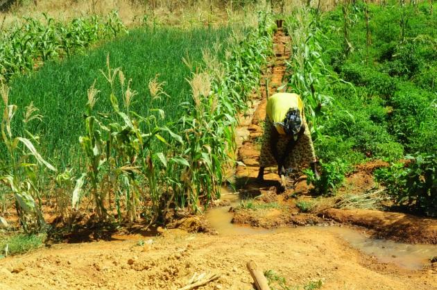 Giornata Mondiale dell'Alimentazione, i numeri della fame nel mondo - Focus.it