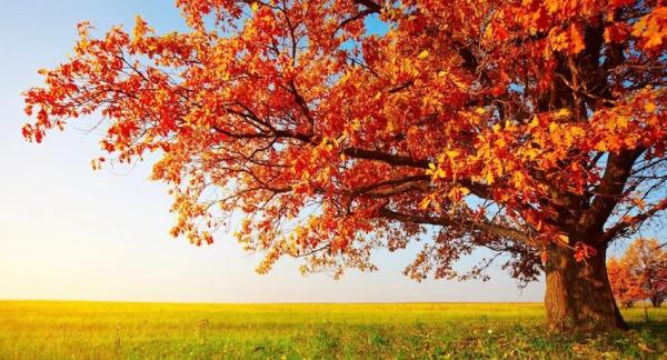 Cómo un árbol se transforma en papel - EcologíaVerde