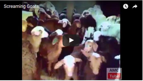 Ein lauter Haufen Ziegen | EIN HERZ FÜR TIERE Magazin