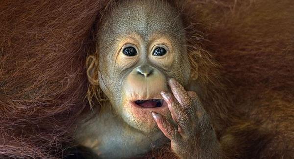 ¿Por qué Greenpeace está en contra del boicot a Nutella? - EcologíaVerde