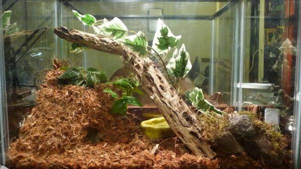 Cuidado de plantas en un terrario - EcologíaVerde