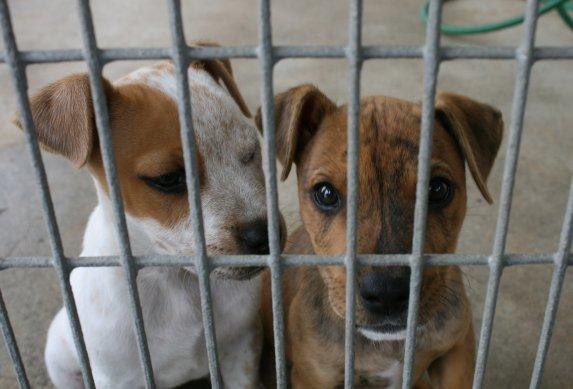 Estos perros fueron enjaulados –y nunca salieron   Blog   PETA Latino