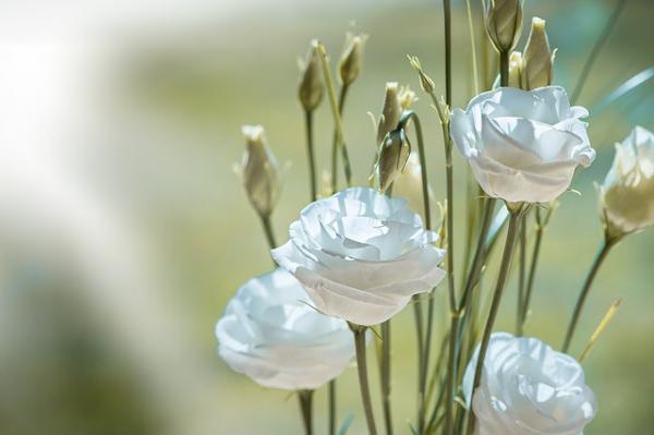 Cultivar flores lisianthus - EcologíaVerde