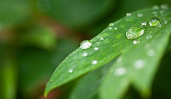 Plantas contra la humedad - EcologíaVerde