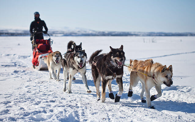 151 Dead Dogs and Counting: PETA's Running Death Toll of the Iditarod | Blog | PETA Latino