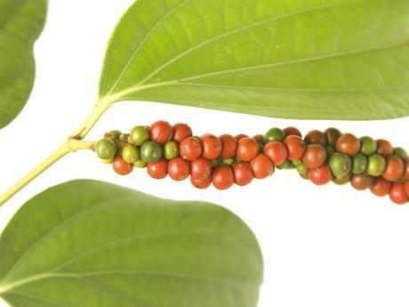 Cómo cultivar pimienta en casa - EcologíaVerde