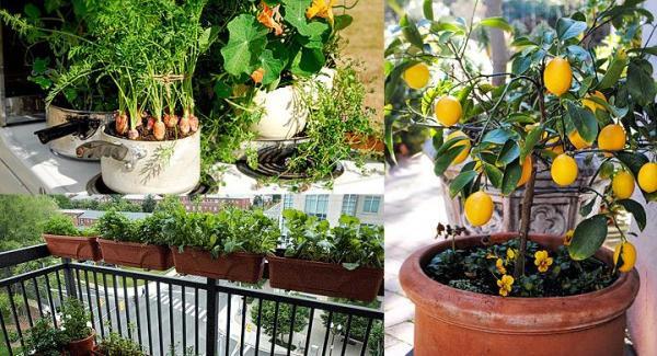 Cómo iniciar tu huerto orgánico en el balcón - EcologíaVerde