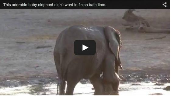 Dieser Baby-Elefant liebt es im Schlamm zu baden und bekommt einfach nicht genug davon | EIN HERZ FÜR TIERE Magazin