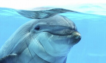 Dolphins Say 'Gracias' to Mexico City Lawmakers | Blog | PETA Latino