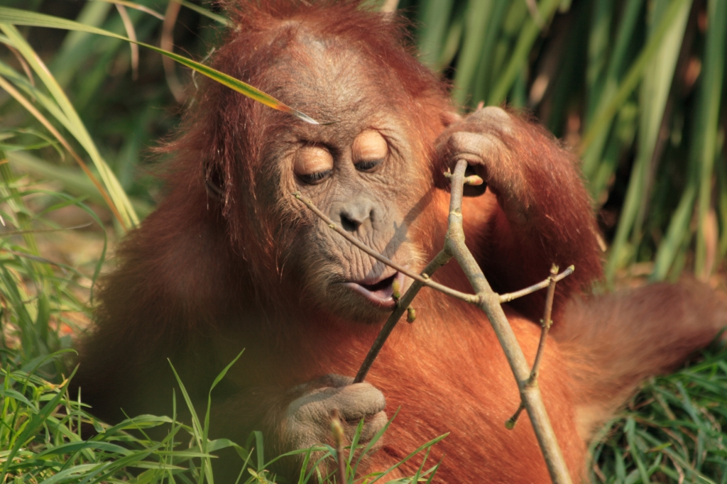 Victory! Universal Celebration as Theme Parks End Use of Primates   Blog   PETA Latino