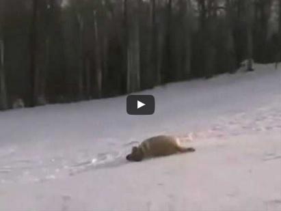 Hunde tollen und rutschen im Schnee   EIN HERZ FÜR TIERE Magazin