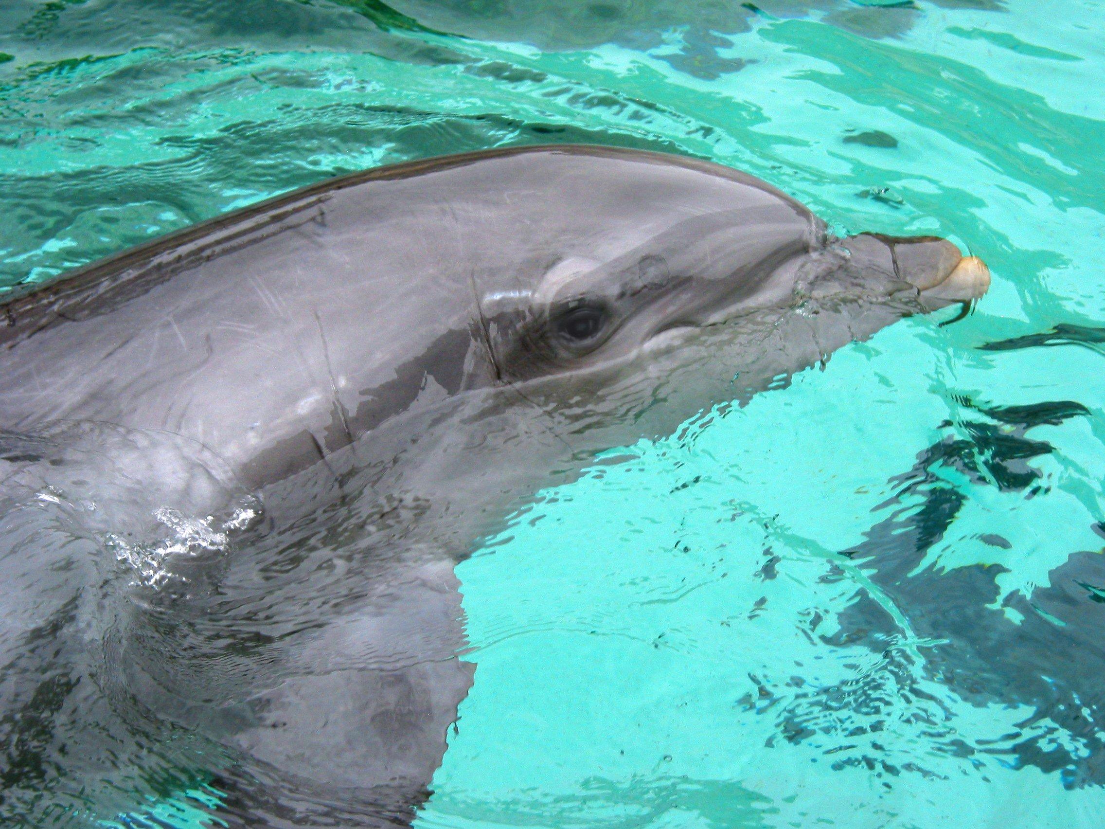 ¿Cuántos delfines han muerto en SeaWorld en los últimos 10 años? | Blog | PETA Latino