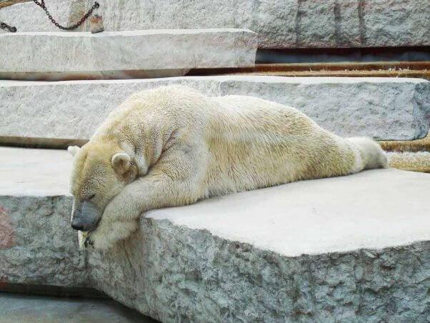 Los zoos pueden perjudicar los esfuerzos de conservación, no ayudarlos | Blog | PETA Latino