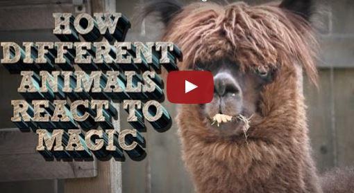 Ein Zaubertrick lässt uns staunen. Doch wie reagieren Tiere darauf? | EIN HERZ FÜR TIERE Magazin