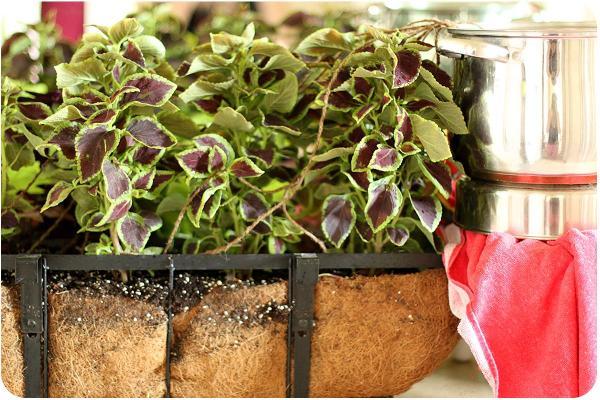 Cómo regar las plantas cuando no estamos en casa - EcologíaVerde