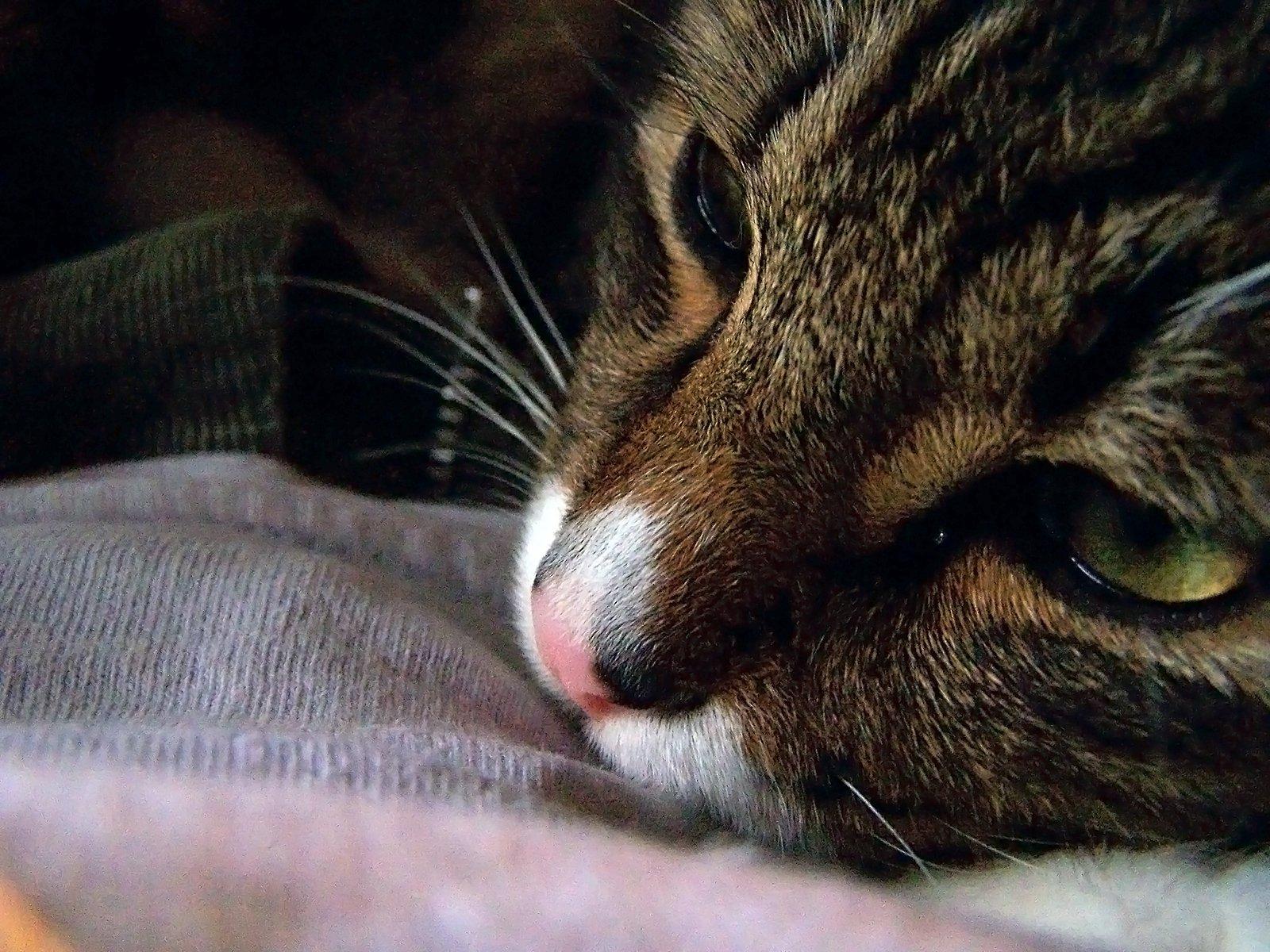 8 razones por las cuales nunca deberías desgarrar a tus gatos | Blog | PETA Latino