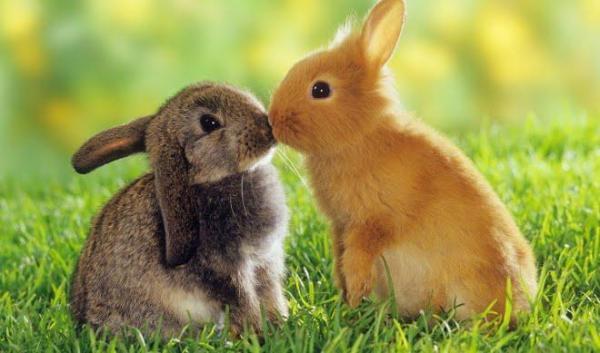 Día Mundial de los Animales - EcologíaVerde