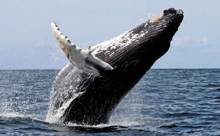 защита китов - Самое интересное в блогах