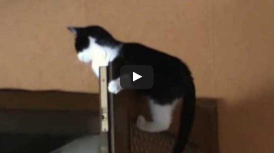 Diese Katze hat den wohl ungewöhnlichsten Ruheplatz, den man sich vorstellen kann | EIN HERZ FÜR TIERE Magazin