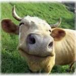 Коровы Profile Picture