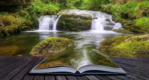 Conocer nuestro entorno para aprender a protegerlo - EcologíaVerde