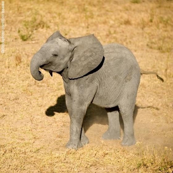 Los adorables elefantes bebé: ¡Nacidos para ser libres! (Fotos) | Blog | PETA Latino