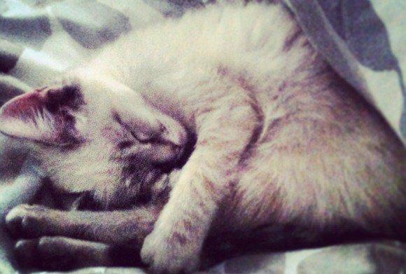 10 Reasons Why My Cat Is My Valentine | Blog | PETA Latino