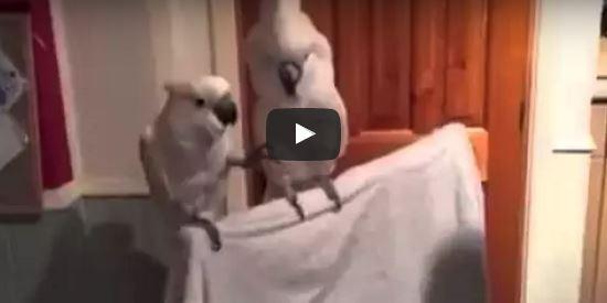 Kakadu tanzt zu Elvis   EIN HERZ FÜR TIERE Magazin